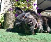 Pup of the Month April - Talulah Bella